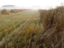 在一个领域的干草堆在日落 图库摄影
