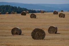 在一个领域的干草捆在捷克 图库摄影
