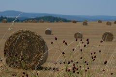 在一个领域的干草捆在捷克 免版税库存照片