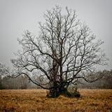 在一个领域的树在一个有雾的冬天下午 库存图片