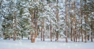 在一个领域的树在与落的雪的冬天,蓝色 雪森林降雪 股票录像
