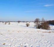 在一个领域的树在冬天 免版税库存图片