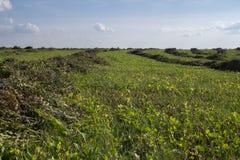 在一个领域的秸杆大包在前景 干草收获  在天空的云彩 农业农场 与培养的领域的小山和 图库摄影