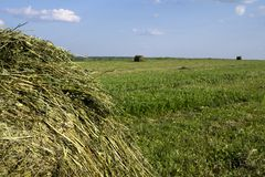 在一个领域的秸杆大包在前景 干草收获  在天空的云彩 农业农场 与培养的领域的小山和 免版税库存照片
