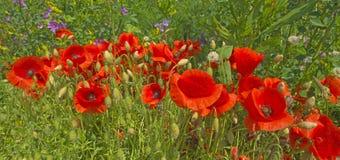 在一个领域的花在春天 库存图片