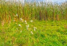 在一个领域的花在秋天 库存图片