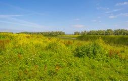在一个领域的野花在夏天 免版税图库摄影