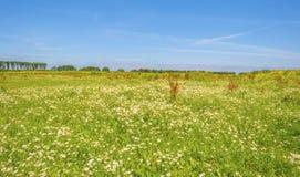 在一个领域的野花在夏天 免版税库存照片