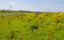 在一个领域的野花在夏天 库存照片