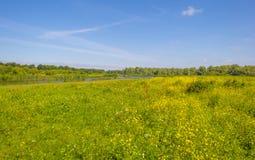 在一个领域的野花在夏天 免版税库存图片