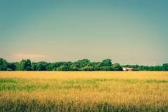 在一个领域的金黄庄稼与谷仓 免版税库存图片