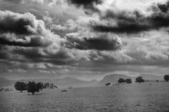 在一个领域的马与惊人的云彩 图库摄影