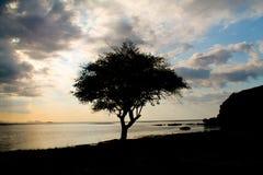 在一个风景的树剪影在日落在卡娜娃海岛 库存图片