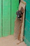 在一个风雨棚的无家可归的小狗狗的 库存图片