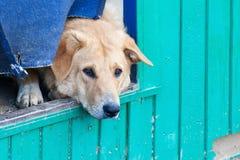 在一个风雨棚的无家可归的小狗狗的 免版税库存图片