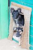 在一个风雨棚的无家可归的小狗狗的 免版税库存照片