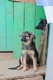在一个风雨棚的无家可归的小狗狗的 图库摄影