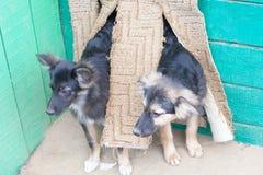 在一个风雨棚的无家可归的小狗狗的 库存照片