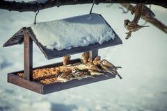 在一个饲养者的麻雀在冬天 免版税库存图片