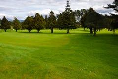 在一个高尔夫球场的绿色在新西兰 免版税库存照片