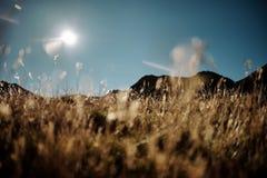 在一个高山牧场地的日落太阳 图库摄影