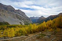 在一个高山谷的秋天 库存图片