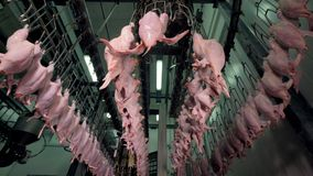在一个鸡加工厂的一个低角度视图在工作 股票视频