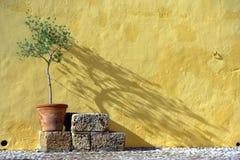在一个黄色背景的一个绿色结构树 图库摄影