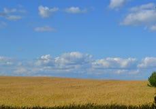 在一个黄色领域的美丽的天空 库存图片