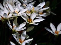 在一个黑暗的场面的白花 库存照片