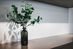 在一个黑暗的瓶的绿色分支 分行绿色留给树苗结构树 背景 图库摄影