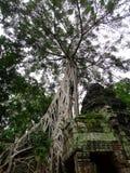 在一个晴天期间, Ta Prohm -寺庙在吴哥,暹粒, Camboja entral公园 库存照片