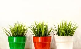 在一个3小塑料桶的新鲜的绿草在白色backgroun 库存照片