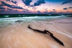 在一个离开的加勒比海滩的漂流木头 免版税库存照片
