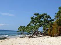 在一个离开的海滩的树 库存图片