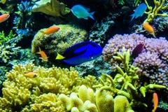 在一个水族馆的绿锦鱼在动物园里 库存照片