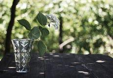 在一个水晶花瓶的白花 免版税库存图片