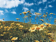 在一个晴朗的下午的野花 库存图片