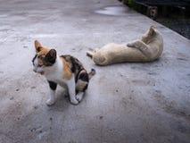 在一个轻松的姿势的小猫 免版税库存图片