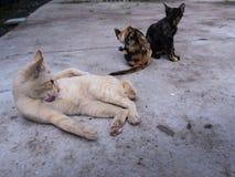 在一个轻松的姿势的小猫 免版税库存照片
