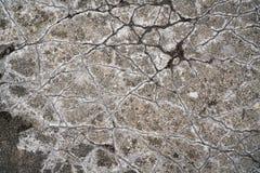 在一个水泥地板的镇压 免版税库存照片