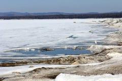 在一个冻湖的银行的海鸥 免版税库存照片