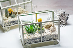 在一个玻璃容器的活仙人掌有自已生态系的 免版税库存图片