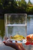 在一个玻璃瓶子的小鱼在湖背景  库存照片