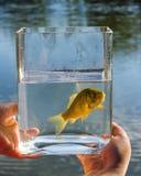 在一个玻璃瓶子的小鱼在湖背景  库存图片