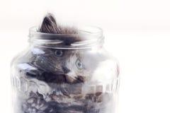 在一个玻璃瓶子的猫 库存图片
