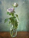 在一个玻璃瓶的两朵桃红色玫瑰 免版税库存照片
