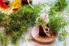 在一个玻璃瓶的杜松精油在一张木桌上 使用在医学、化妆用品和芳香疗法 新鲜的绿色小树枝 selec 免版税库存图片