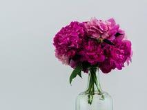 在一个玻璃瓶的淡紫色牡丹 库存图片