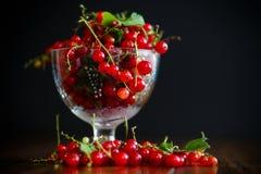 在一个玻璃花瓶的成熟红浆果 库存照片